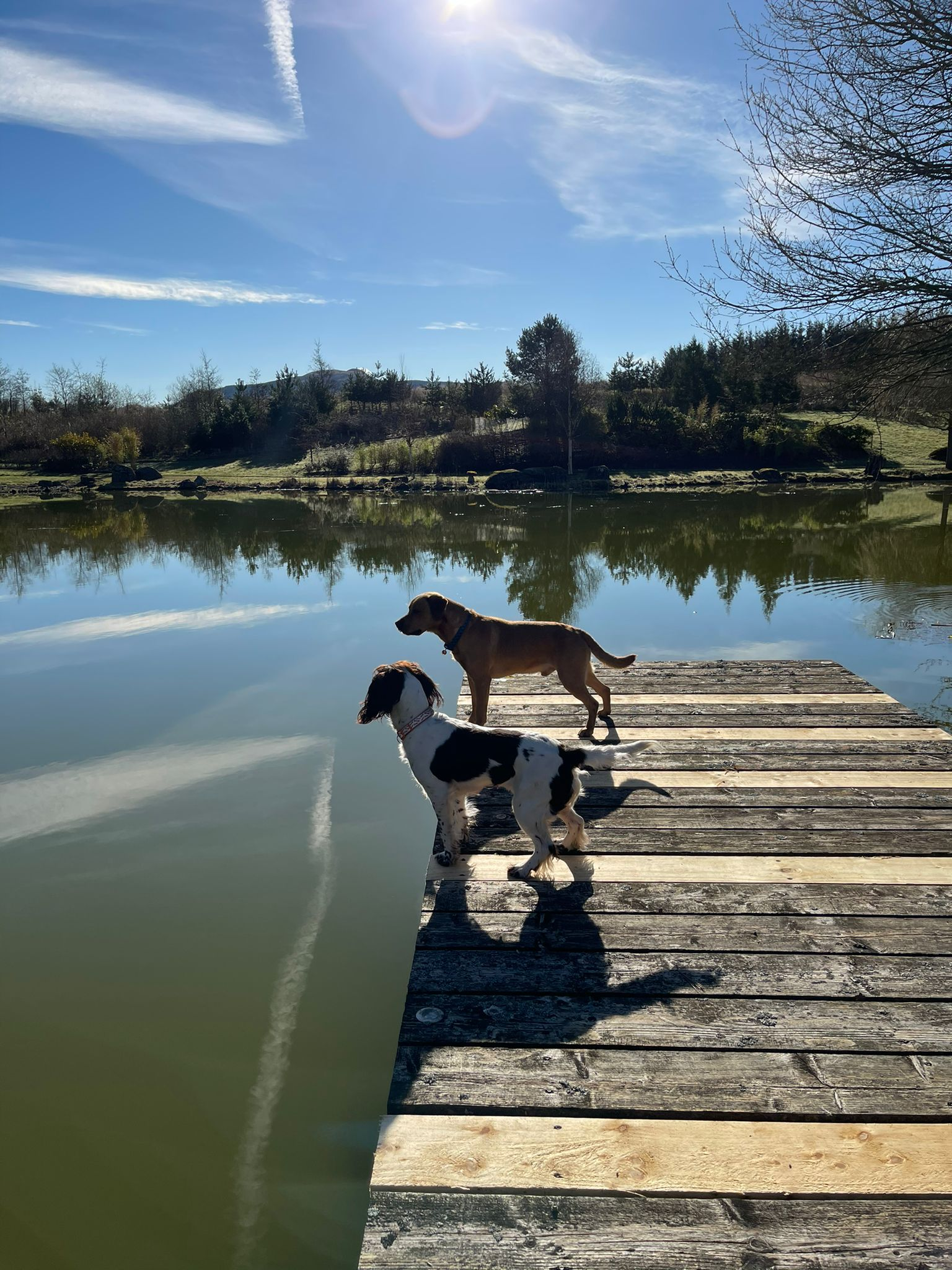 Dogs on the jetty at Auchterarder House